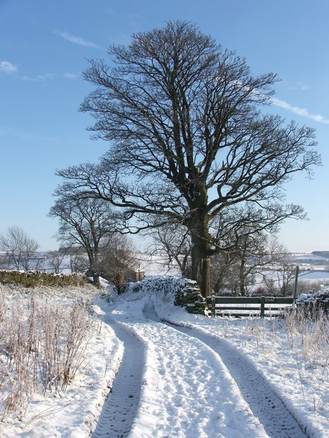 Track to Greenwell Farm