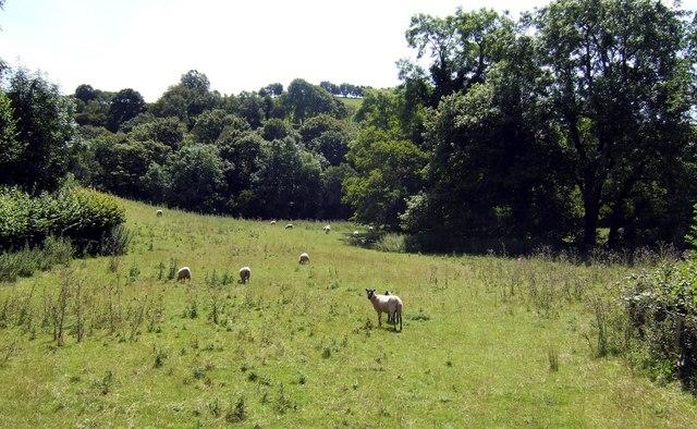 Sunny sheep pasture