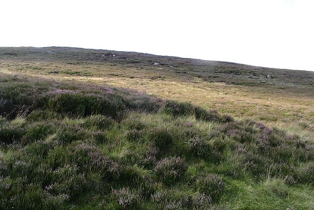 Heather hillside