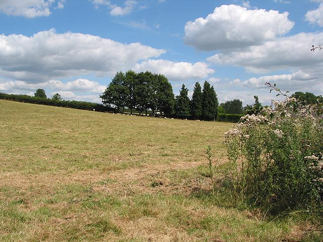 Grazing land near Sellack Marsh