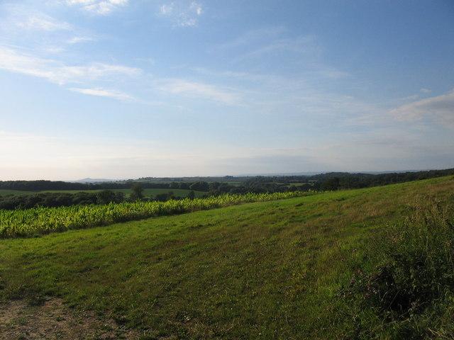 Farmland south of Bratton Seymour