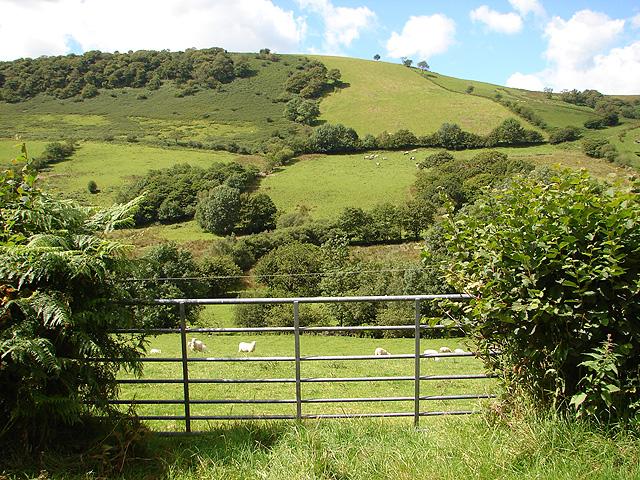 Pasture in Cwm Nant Carfan