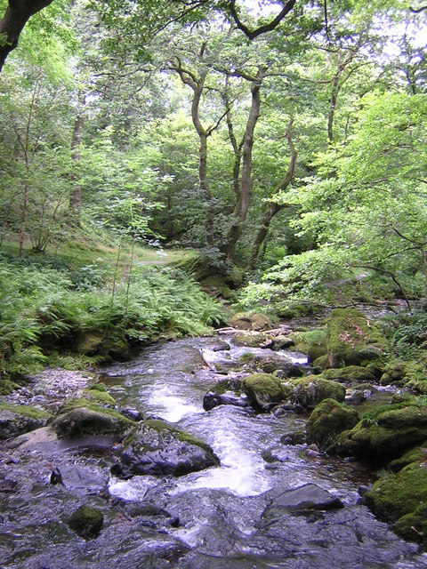 Lower Dolgoch Falls