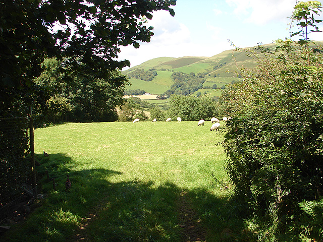 Pasture in Cwm Tafolog