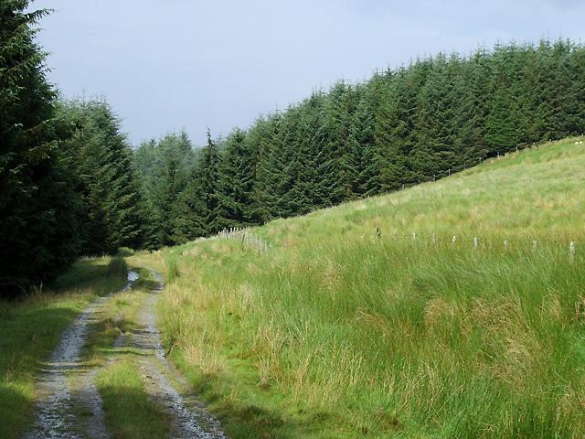 Forestry Track, Bryn Mwysau, Ceredigion
