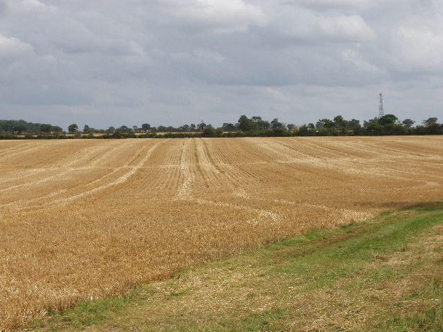 Stubble after harvesting