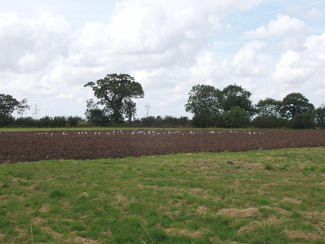 Recently ploughed field with birds