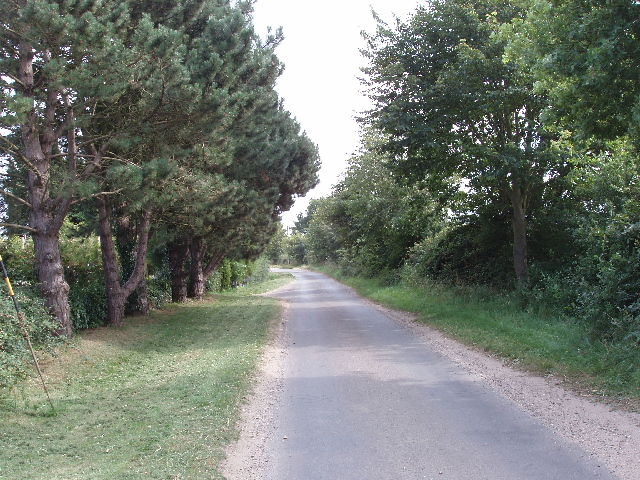Road near Daffy Green lined with conifers