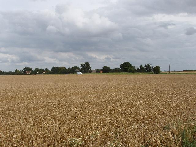 Wheat field by A1075 Dereham Road