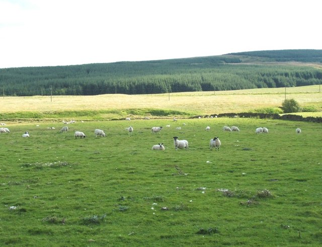 South West of Shankhead