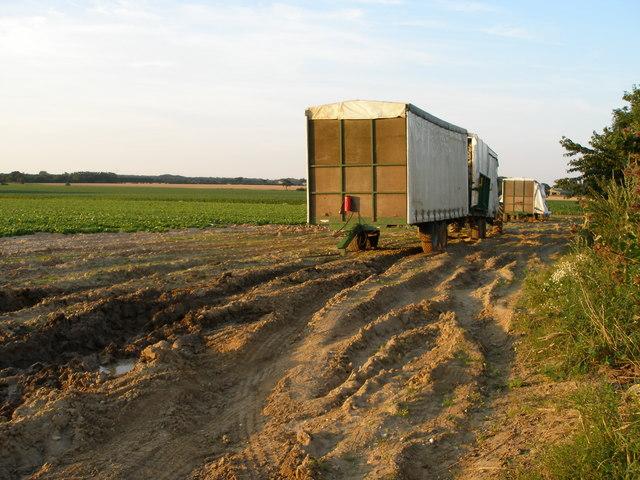 Farm wagons and muddy ruts