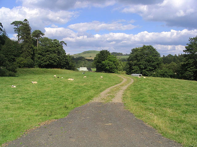 Farm track and grazing field
