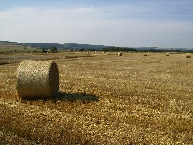 Harvested fields at Binnington Carr
