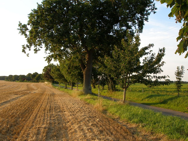 Farmland and tree edged lane