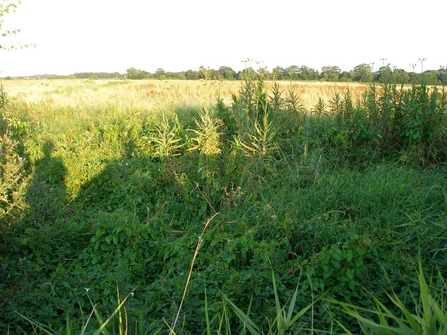 Across farmland towards tree lined Muck Fleet