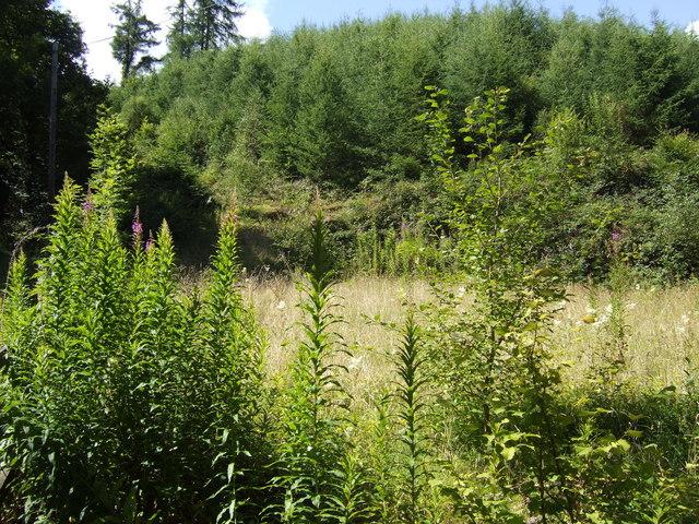 Woodland in Cwm Dwr