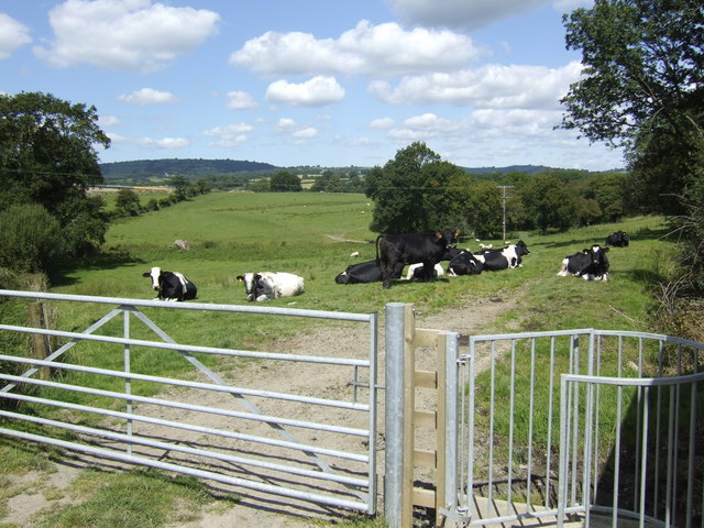 Footpath past the dairy cattle