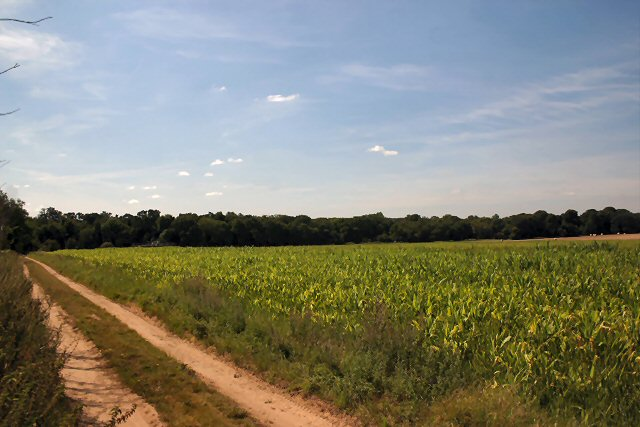 Track and field near Weeting