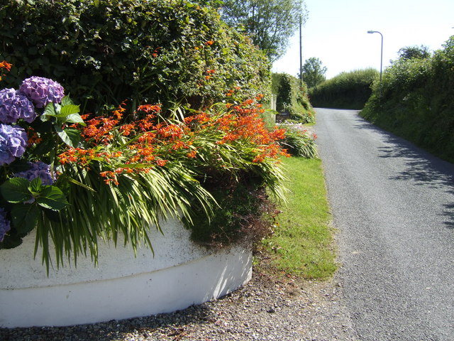Floral display on Ash Lane, Tavernspite
