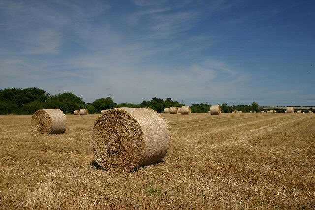 Harvested field at Hockwold