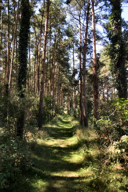 Weeting Heath National Nature Reserve