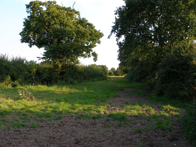Hedges and trees in the field