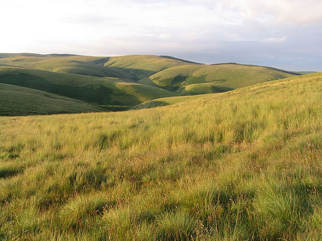 On the northwest slopes of Saughtree Fell
