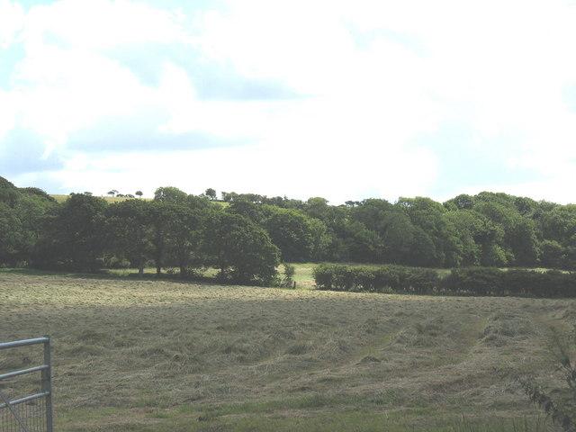 Hay meadow opposite Dyffryn