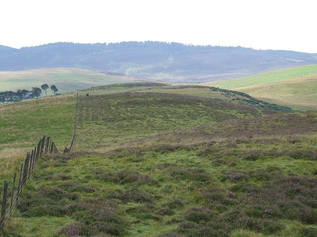 Fence Line on Carlunie Hill
