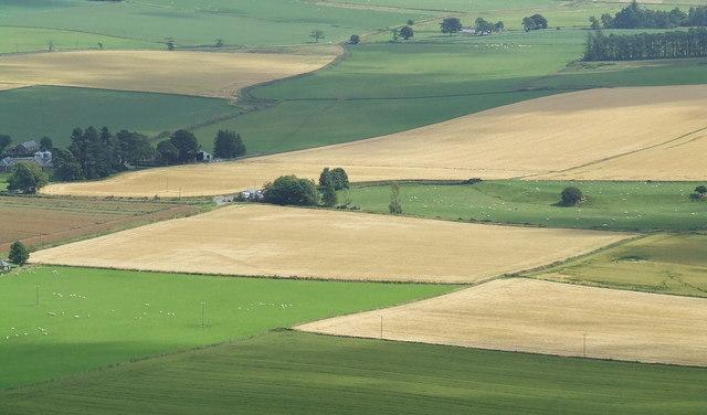 Fields around Dryburn