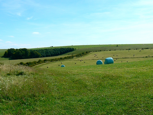 Field with bales of silage, near Little Cheverell