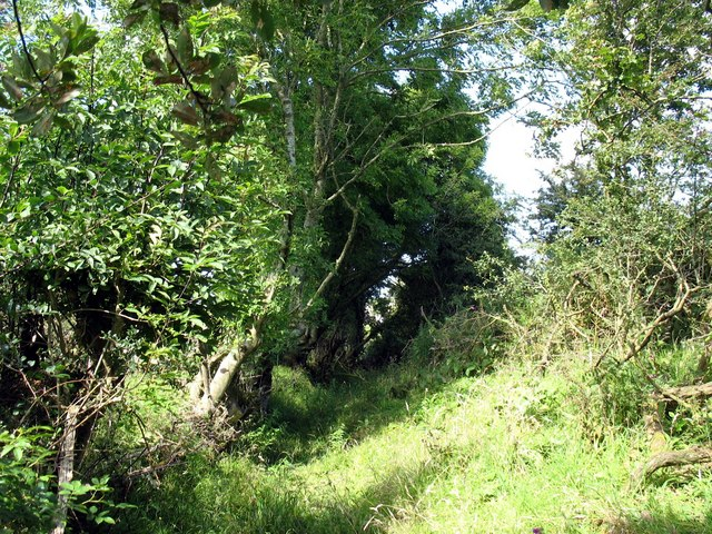 Overgrown section of the path near Ty Coch
