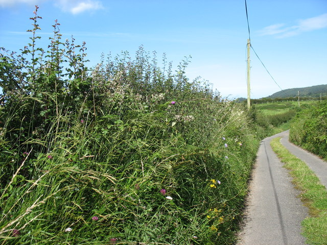 Flowery hedgerow by Hendre Farm