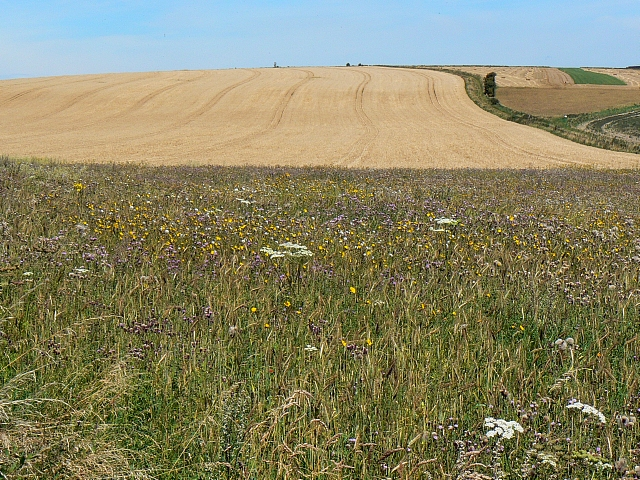 Environmental margin south of Bratton