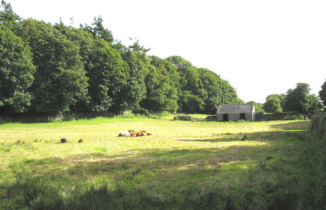 A field at Plas Gwyn with cattle, barn and antiquities