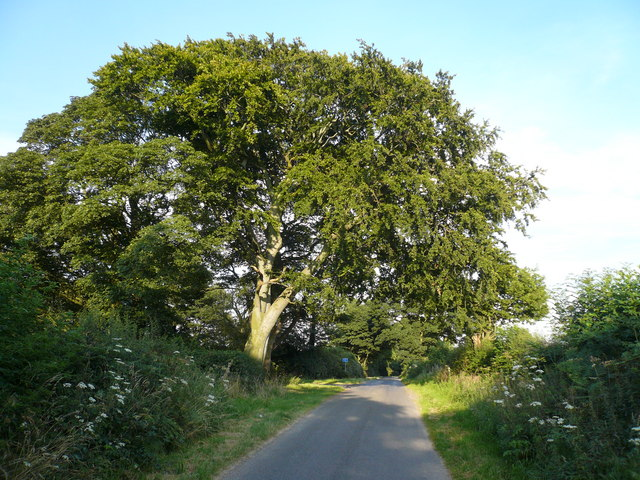Spreading Tree marks the Junction of the lane to Astwith and Branch Lane