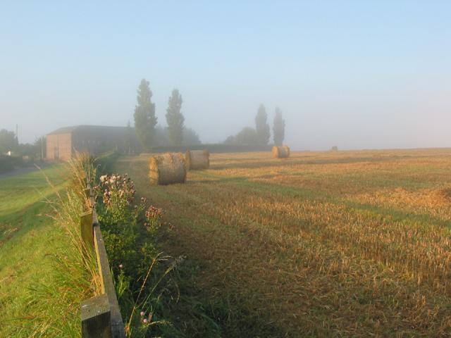 Morning mist on wheat field