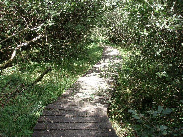 Lower Lewdon Nature Reserve