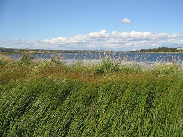 Grass, Kilbirnie Loch.