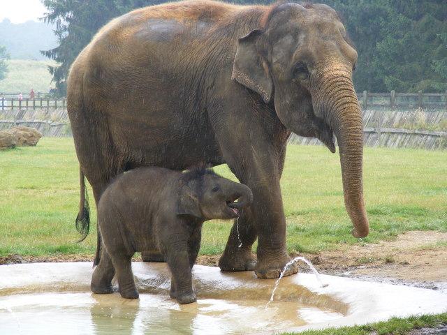 Whipsnade Zoo Elephant Enclosure