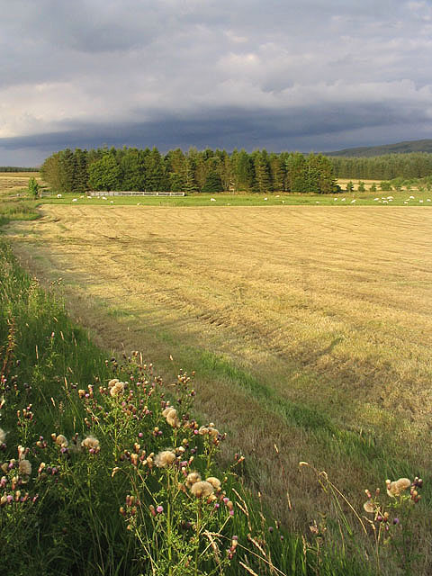 Farmland at Steele Road