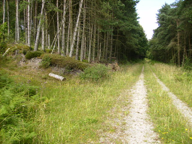 Unmapped track and path junction in Cropton Forest