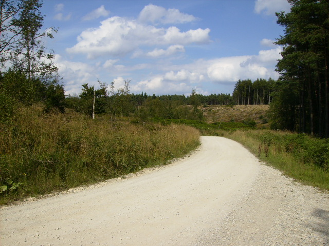 Forestry road at Raindale Head leading into Cropton Forest