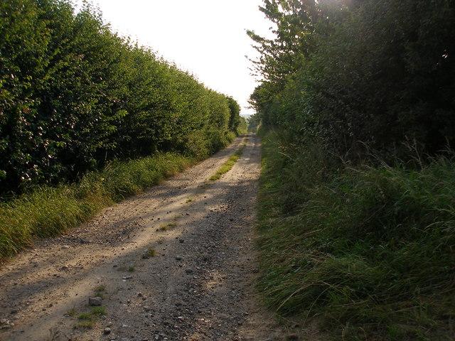 Up the lane