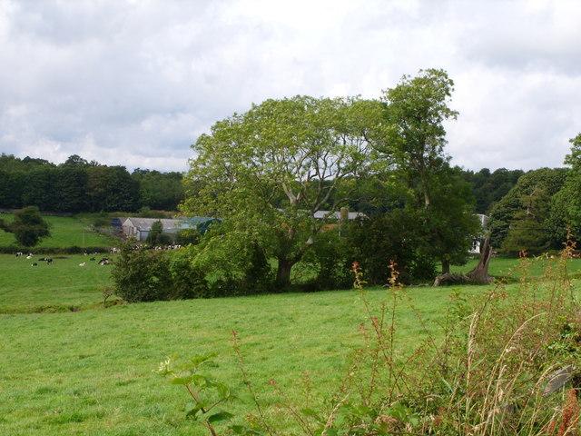 Enrick Farm Through the Trees