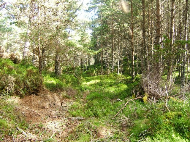 Overgrown track, Abernethy Forest