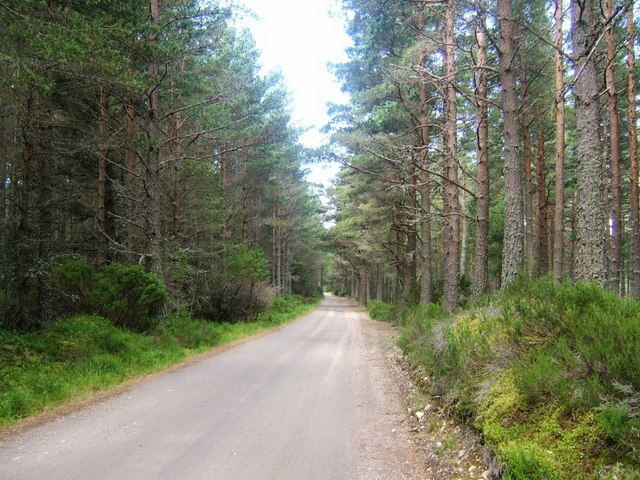Road to Cuchanlupe, Abernethy Forest