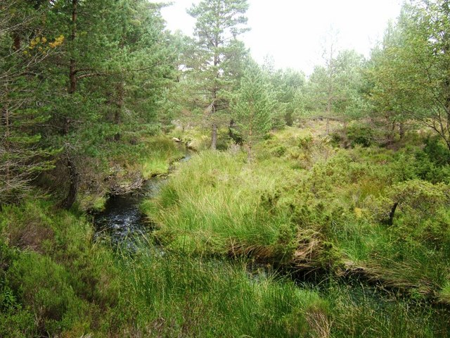 Duack Burn, Abernethy Forest
