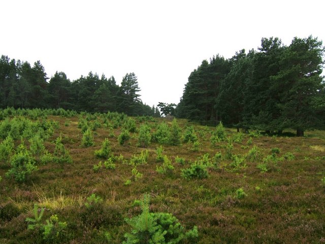 Edge of Abernethy Forest - near Lurg