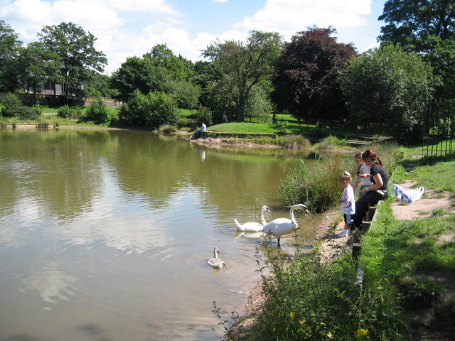 Feeding the Swans, Princes Park Lake